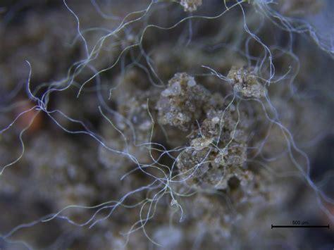 in den boden ableiten mikroplastik eine gefahr f 252 r den erdboden stabsstelle presse und kommunikation freie