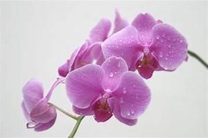 Orchidee Klebrige Tropfen : orchidee wasser tropfen stockfoto bild von kompliziert ~ Lizthompson.info Haus und Dekorationen