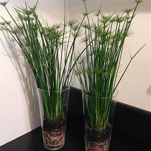 Grand Pot De Fleur Interieur : plantes en pot d 39 int rieur tentez l 39 originalit avec ~ Premium-room.com Idées de Décoration
