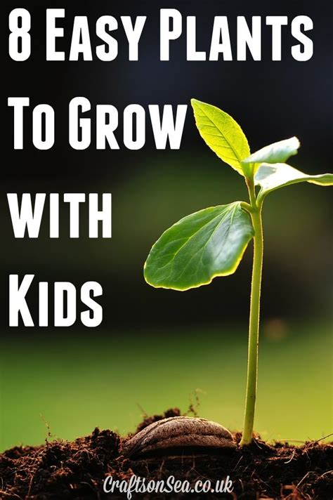 interesting plants to grow 240 best images about unit planting and flowers on pinterest montessori plant life cycles