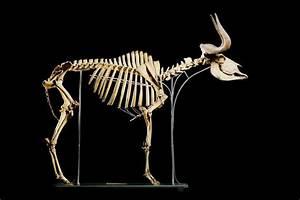 Wildebeest Bones | Wildebeest | Pinterest | Bone jewelry