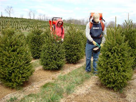christmas tree farm prices photo albums fabulous homes