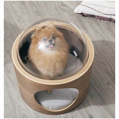 Bed Spaceship Cat Wall Modern Mounted Ultra