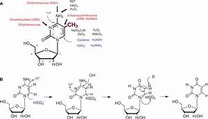 A  Chemical Reactivity Of Cytidine And M5c  The Methyl