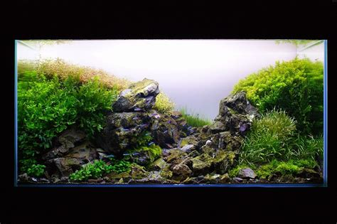 tutorial aquascape aquascaping tutorial aquascape layout inspiration