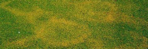 Im Rasen Kreisförmig by Rasenkrankheiten Ursachen Vorbeugung Bek 228 Mpfung Ein