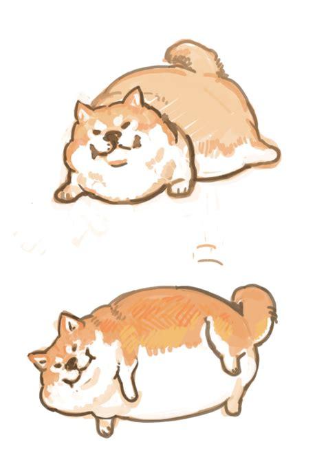 hahahahacute fat dogd   love cute dog