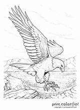 Coloring Pages Rush Gold Memorial California Adult Colouring Sheets Drawing Eagle Adults Older Burning Wood Bald Books Drawings Getdrawings Printable sketch template