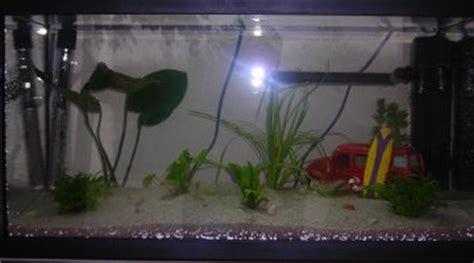 quel poisson choisir pour un petit aquarium quel poisson choisir peinture antirouille