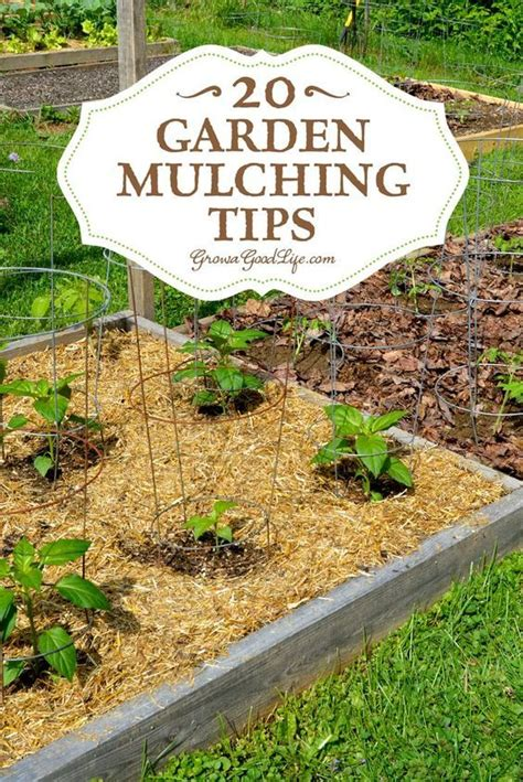 vegetable garden mulch ideas 20 garden mulching tips from seasoned growers gardens beds and weed
