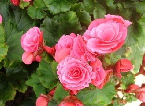 วันอังคารกับดอกไม้สีชมพู - กานดาน้ำมันมะพร้าว - GotoKnow