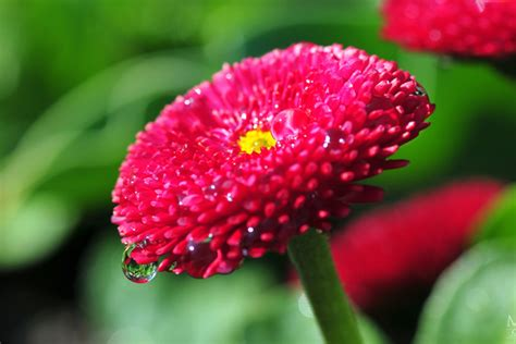 beautiful flower pictures incredible snaps