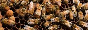 Beekeeping And Honey Bee Fun Facts  Did You Know
