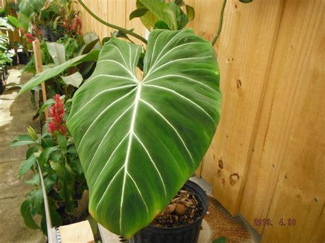 plants   weeks hours    exotica