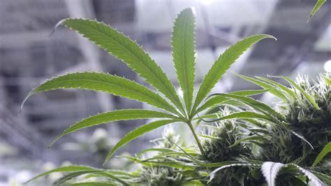 medical marijuana  pennsylvania  patients  sign