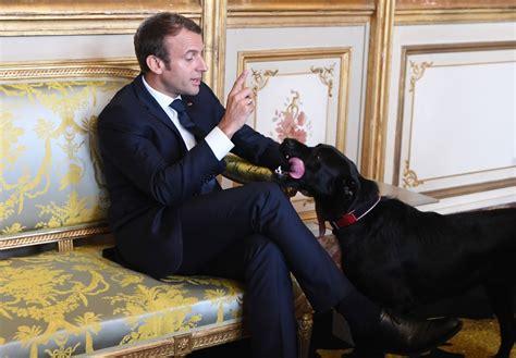 emmanuel macrons dog nemo interrupts meeting  relieve