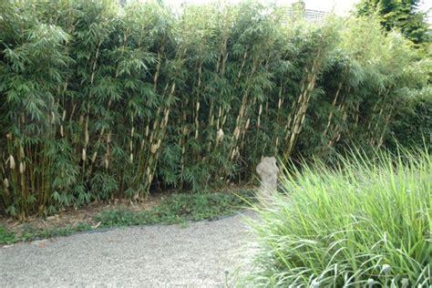 schnellwachsende heckenpflanzen hecken ratgeber