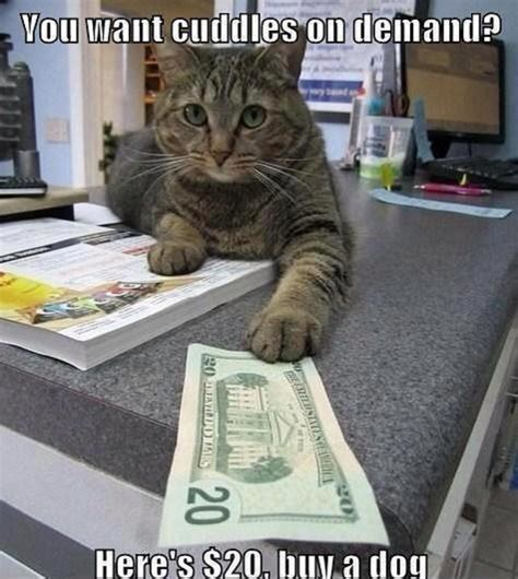 You Want Cuddles On Demand Funny Cat Memes