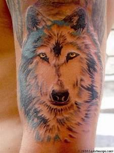 Loup Tatouage Signification : quelle est la signification des tatouages de loups vous voulez vous faire tatouer mais avant ~ Dallasstarsshop.com Idées de Décoration
