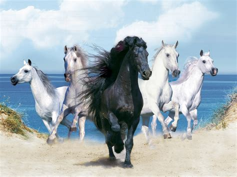 horse horses desktop wallpapers hd backgrounds sea cool background running animals four near wild awesome scenery pretty pic animal equine