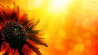 Free Flowers Desktop Wallpaper for Windows 10