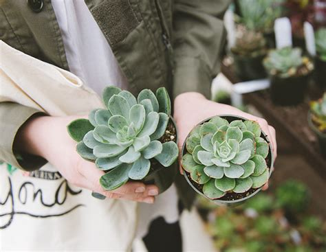 succulent plants poisonous cats jojotastic pet friendly houseplants a diy