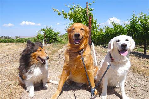 reasons  winery   dog modern farmer