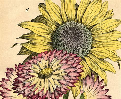 lovely vintage sunflower printable  graphics fairy