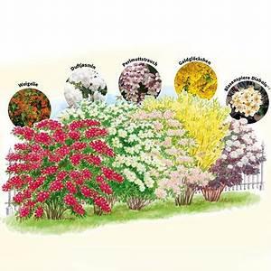 Blühende Hecken Sträucher : g rtner p tschkes bl tenhecke 5 pflanzen heckenpflanzen ~ Watch28wear.com Haus und Dekorationen