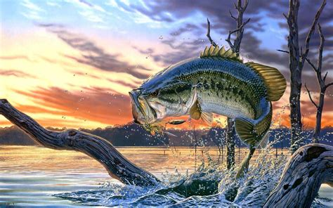 Images Of Bass Fish Bass Fishing Wallpaper Backgrounds Wallpaper Cave