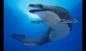 埃及「龍王鯨」演繹殘酷獵殺 吞掉同類後遭鯊魚啃食 | ETtoday寵物動物 | ETtoday東森新聞雲