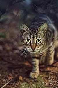 Photograph stalking cat by Mine Köşe on 500px