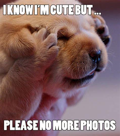 Puppy Meme - puppy meme on tumblr
