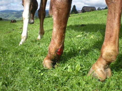 meine pferde meine pferdeoffenstallreitbeteiligung