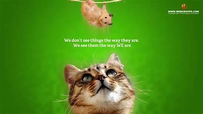 Funny Animal Wallpapers Animals Desktop Backgrounds Cartoon