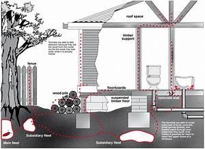 How Do Termites Get Into Your Home