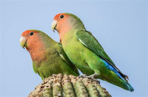 34 best images about arizona wildlife on pinterest the