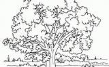 Tree Coloring Pages Cherry Blossom Step Drawing Printable Blossoms Oak Getdrawings Jesus Sheets sketch template