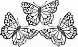 Coloring Butterfly Template Printable Pages Popular sketch template