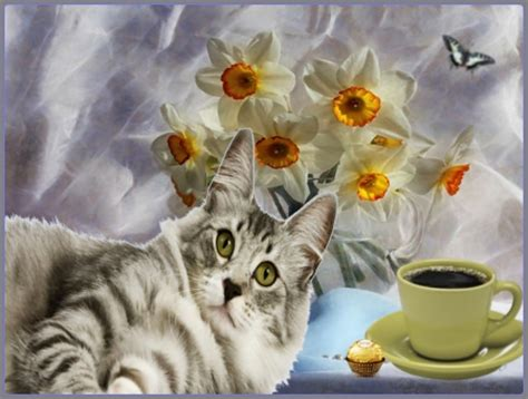 Morning Animal Wallpaper - morning cats animals background wallpapers on
