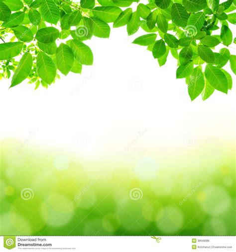 Abstract Green Leaf Wallpaper by Green Leaf Abstract Background Royalty Free Stock Images