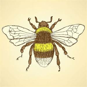 The World's Best Photos of bee and sketch - Flickr Hive Mind