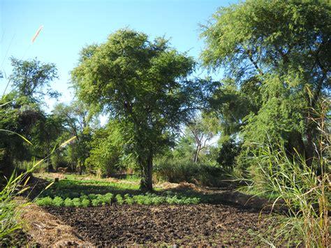 No aitām līdz zvaigznēm - Koki lauksaimniecības zemēs ...
