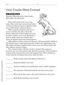 fossils  formed worksheet    grade