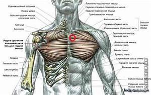Сердце на эхо экг при гипертонии