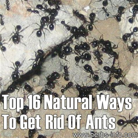 best way to get rid of ants best way to get rid of ants in bathroom 28 images 7 ways to get rid of ants all home and 7