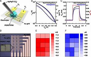 Transparent  Conformable  Active Multielectrode Array