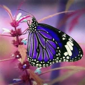 Beautiful Purple Butterflies Flowers