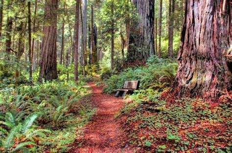 Earth Pictures On Twitter Jedediah Smith Redwoods State