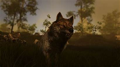 Wolf Atlas Tame Capture Guide Official Wiki